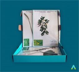 """фото - Гербарій """"Систематика рослин. Родина Бобові. Родина злакові"""""""