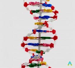 фото - Структура ДНК