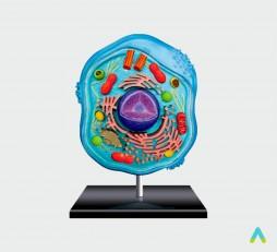 фото - Клітина тваринна