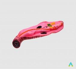 фото - Дощовий черв