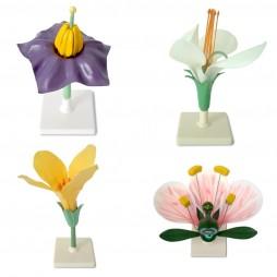 Квітки представників різних родин
