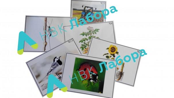 Агроценоз - фото