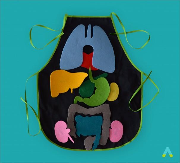 Внутрішня будова тіла людини - фото