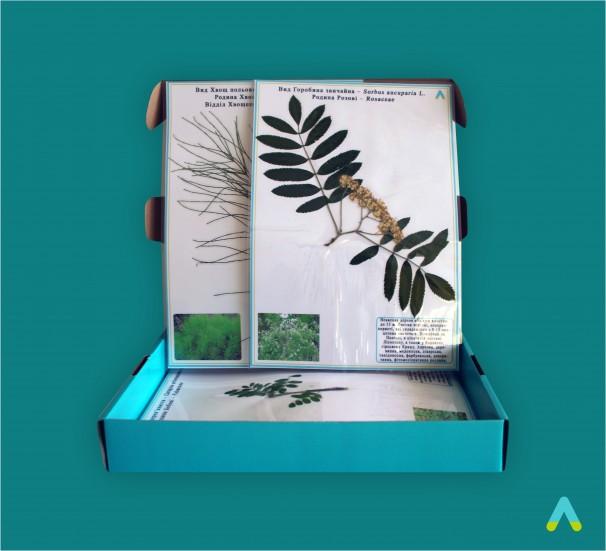 Гербарій «Різноманітність листків» - фото