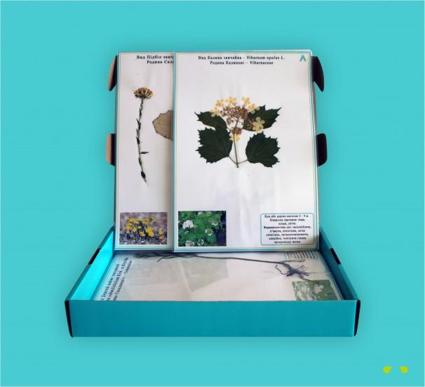 """Гербарій """"Лікарські рослини"""" - фото"""