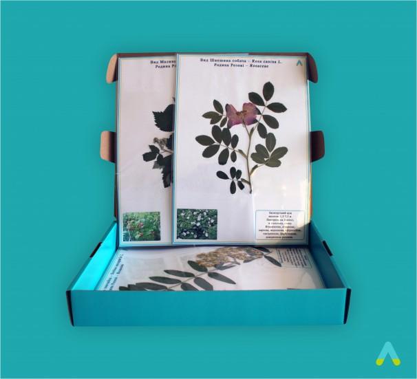 """Гербарій """"Систематика рослин. Родина Розоцвіті"""" - фото"""