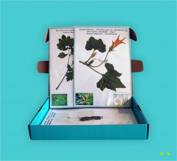 """Гербарій """"Систематика рослин. Вищі спорові та насінні рослини"""" - фото"""