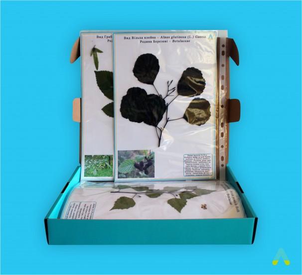 """Гербарій """"Життєві форми рослин"""" - фото"""