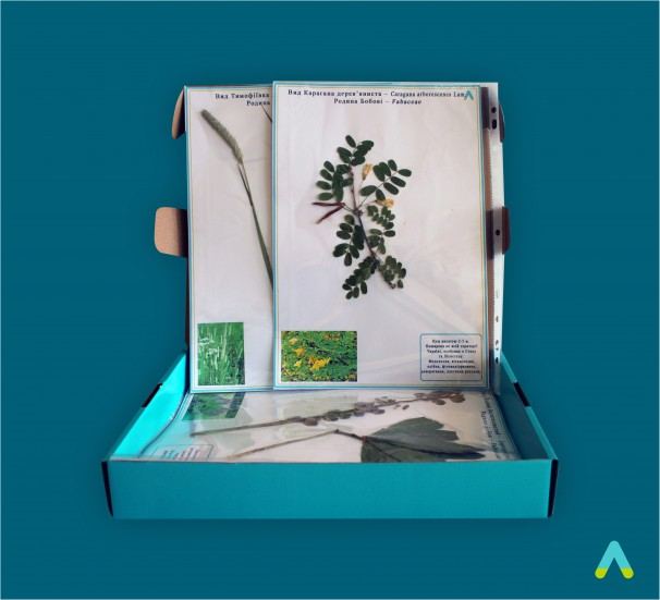 """Гербарій """"Систематика рослин. Родина Бобові. Родина злакові"""" - фото"""