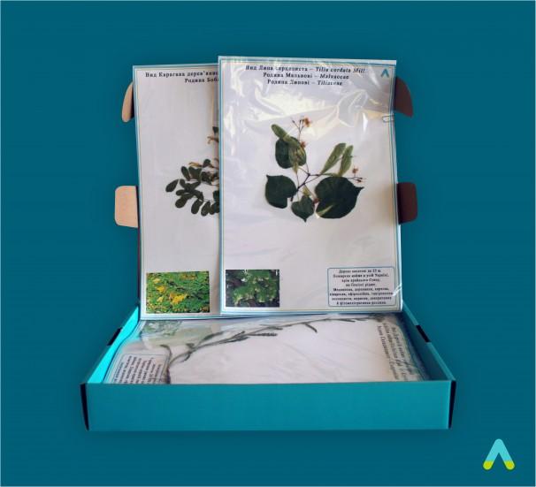 """Гербарій """"Морфологія рослин"""" - фото"""