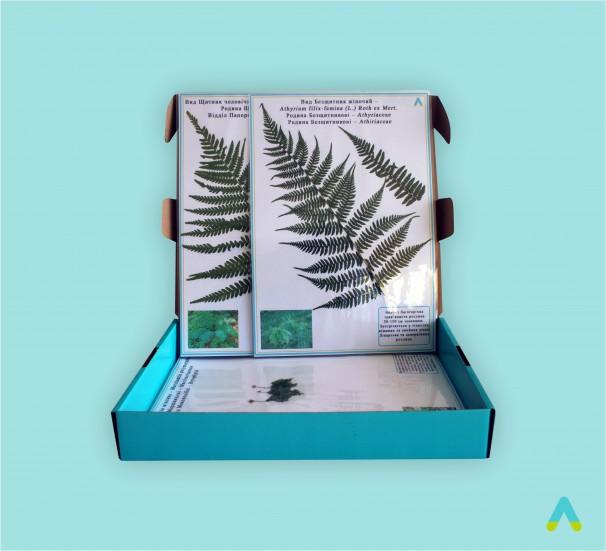 """Гербарій """"Спорові рослини (відділи: Мохо-, Плауно-, Хвоще-, Папоротеподібні)"""" - фото"""