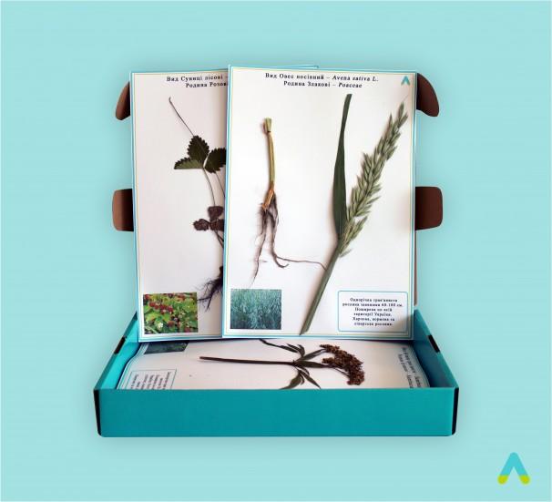 """Гербарій """"Систематика рослин. Родина Пасльонові. Хрестоцвіті. Складноцвіті"""" - фото"""