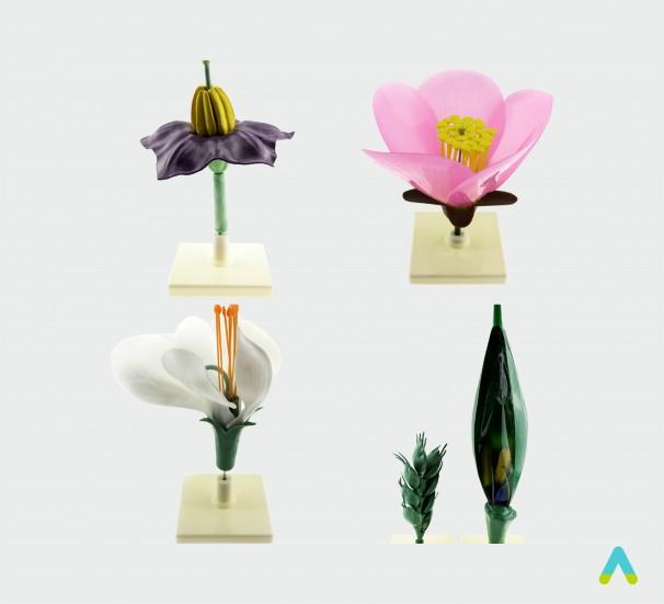 Квітки представників різних родин - фото