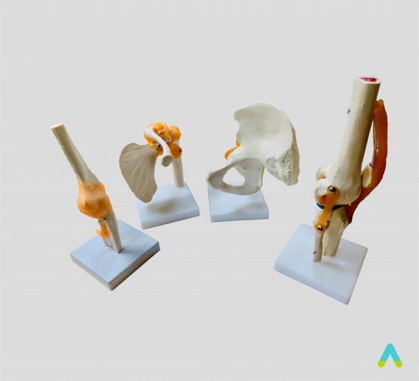 Суглоби людини (різні типи)