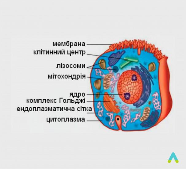 Будова клітини