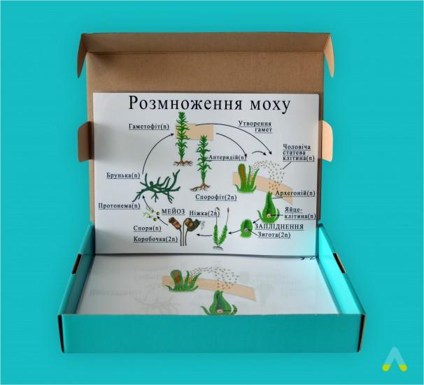 """Модель-аплікація """"Розмноження моху"""" - фото"""